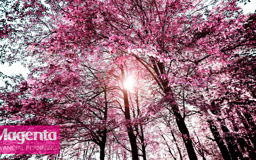 Find out more about our Magenta Forest! By Jamie Flook