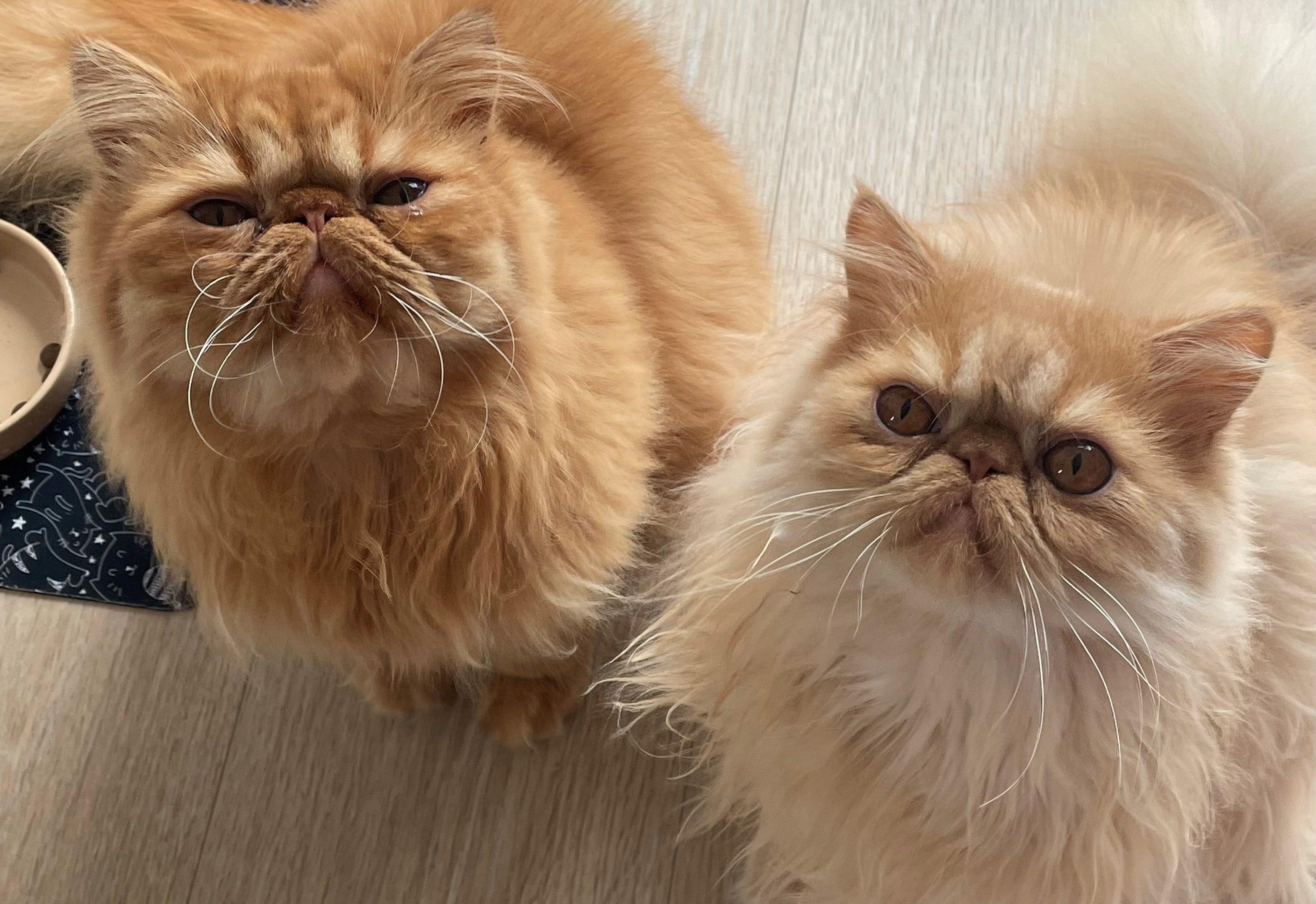 Teddy & Pumpkin